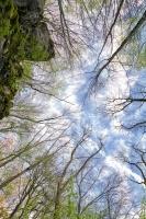 Kopfüber - Felsen und Bäume mit Blick nach oben