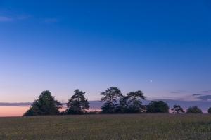 Bäume auf den Hülenbuchwiesen