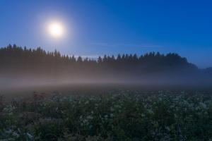 Vollmondnacht auf den Hülenbuchwiesen II