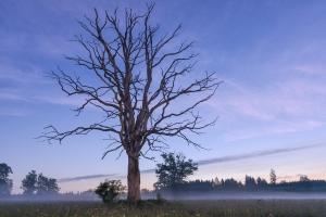 Toter Baum im Irndorfer Hardt