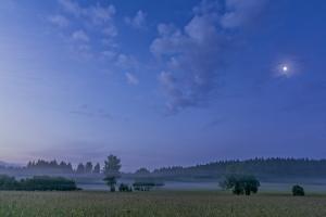 Mond in der blauen Stunde im Irndorfer Hardt