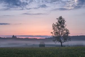 Birke am Ende der blauen Stunden im Irndorfer Hardt