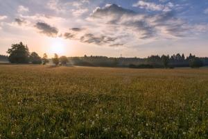 Wiese bei Sonnenaufgang