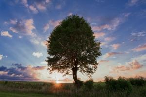 Sonnenaufgang hinter einem Baum auf der Albhochfläche