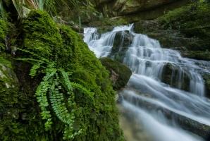 Wasserfall der Elsach mit Farn im Vordergrund