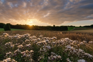 Sonnenaufgang bei Westerheim