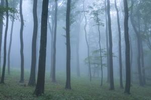 Nebelstimmung im Alb-Wald bei Erkenbrechtsweiler