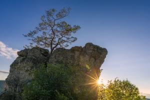 Baum auf Alb-Felsen