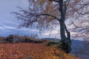Herbstlicher Baum am Albtrauf