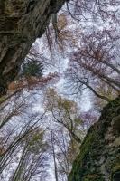 Himmelsblick zum Herbstwald - Hochkant