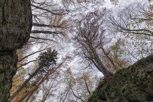 Himmelsblick zum Herbstwald