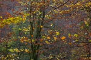 Herbstlicher Baumblick bei Grabenstetten