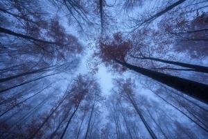 Wald-Blick nach oben in der Blauen Stunde