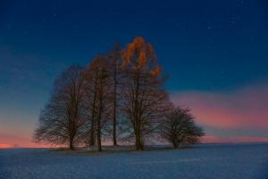 Baumgruppe in der blauen Stunde am Kornbühl