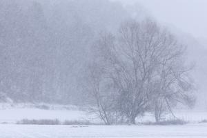 Schneefall im großen Lautertal II