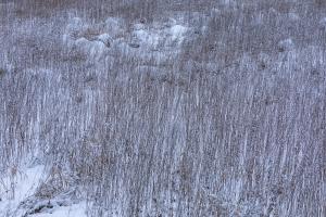 Pflanzenstängel im Winter