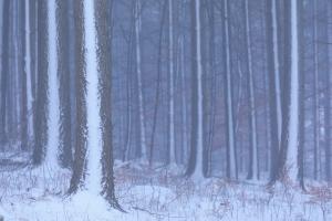 Schnee an der Windseite