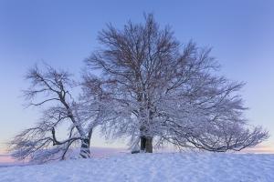 Zwei Winterbäume