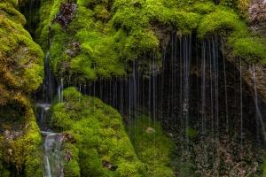 Moosdurchfließendes Wasser