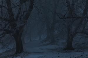 Nächtliche Winteralle