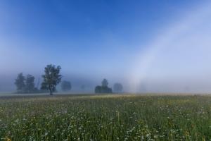 Teil eines Nebelbogen im Irndorfer Hardt