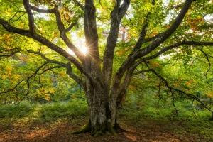 Sonnenstrahlen mit Herbstbaum