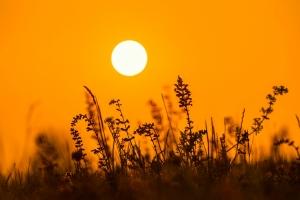 Sonne über Albpflanzen