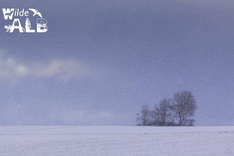 Schneefall bei einer Baumgruppe